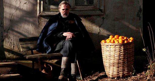 mandariinid_tangerines_still